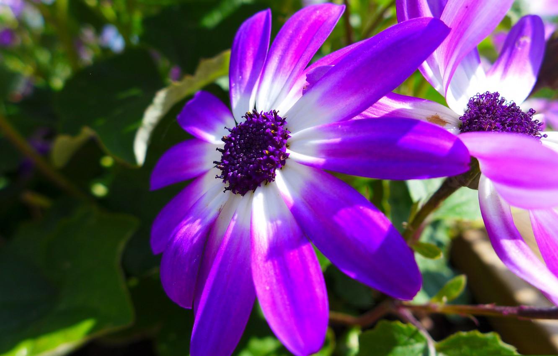 Photo wallpaper flower, nature, petals, garden