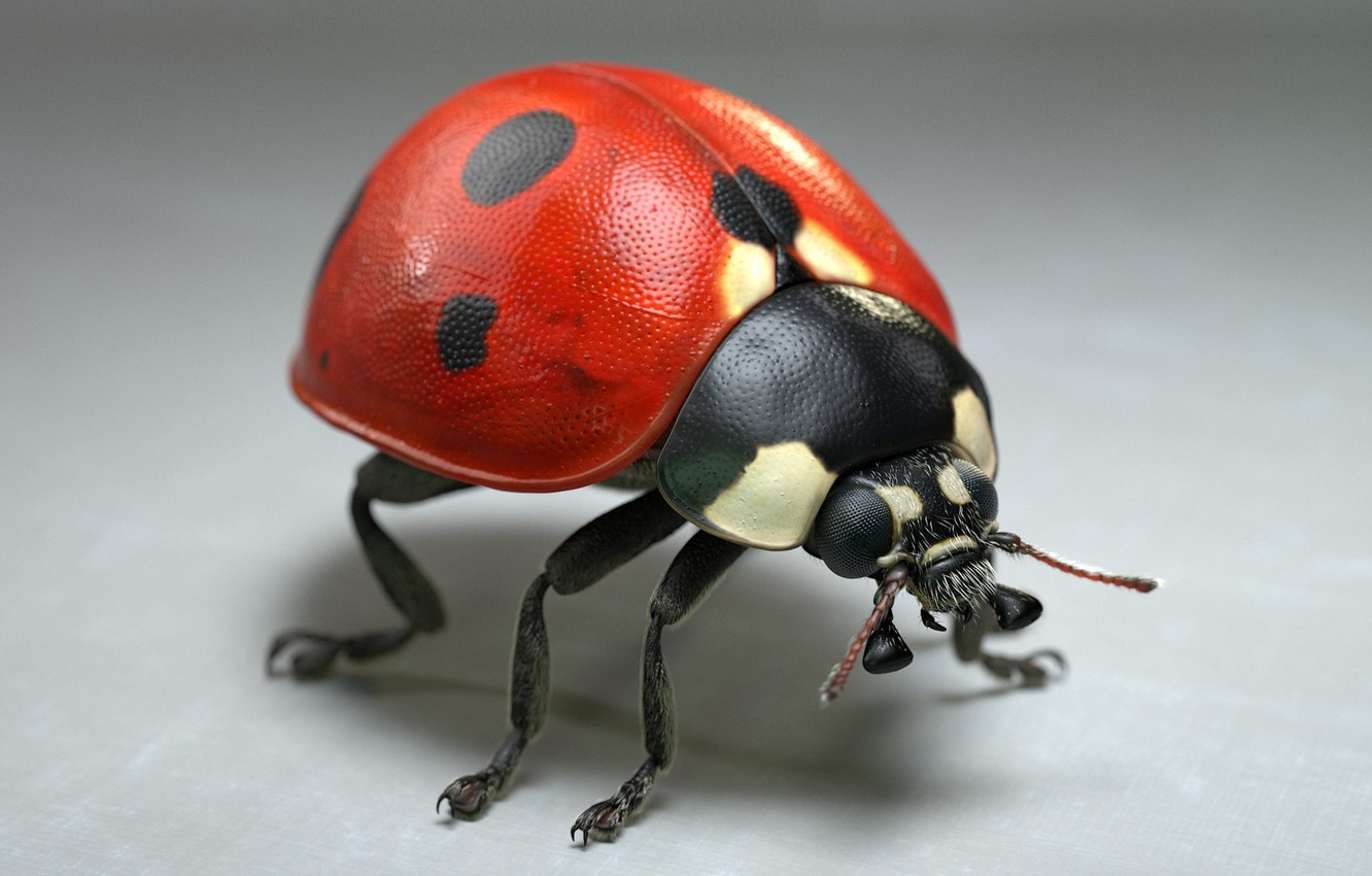 Photo wallpaper ladybug, art, Jocelyn Strob Simard