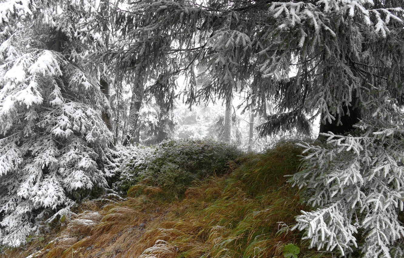 Photo wallpaper winter, forest, snow, nature