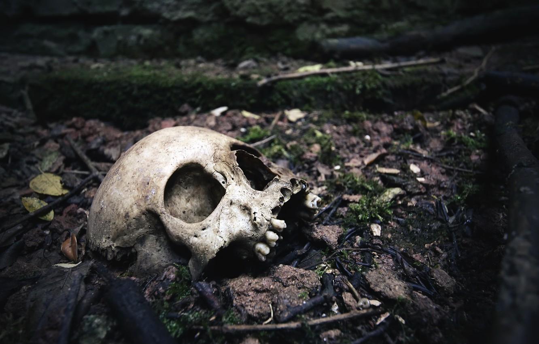 Photo wallpaper skull, teeth, naturalism