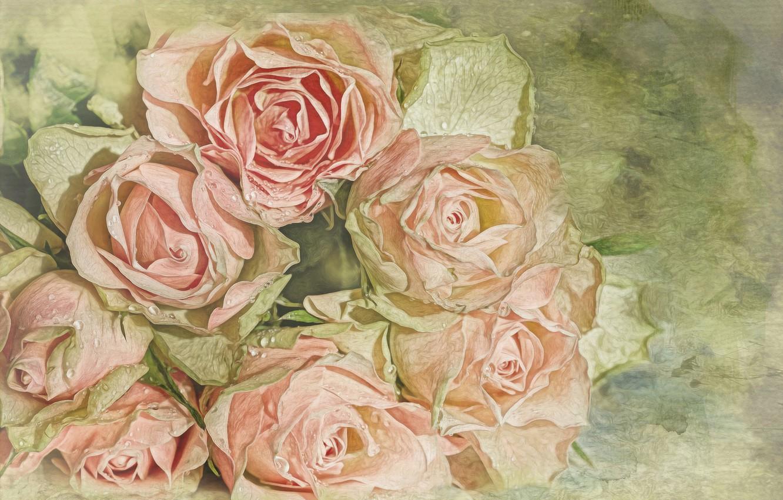 Photo wallpaper drops, roses, treatment, bouquet, buds