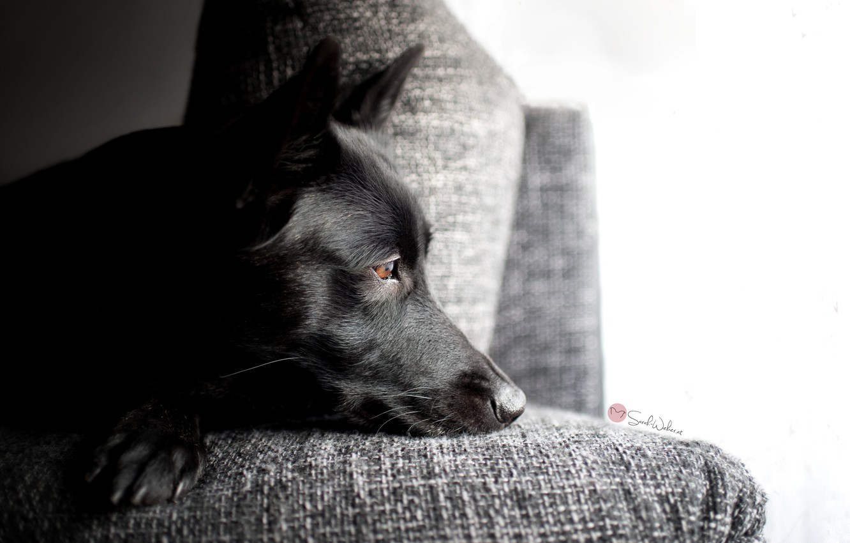 Photo wallpaper sadness, each, dog