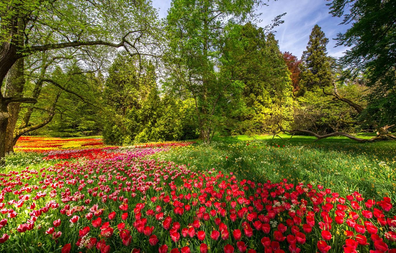 Photo wallpaper trees, flowers, Park, spring, Germany, tulips, Germany, Baden-Württemberg, Baden-Württemberg, Mainau Island, Mainau Island
