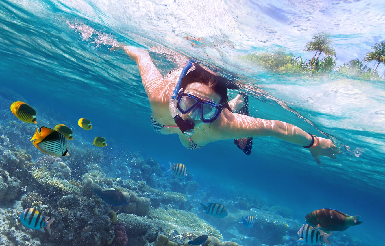 Photo wallpaper diving, marine life, scuba diving