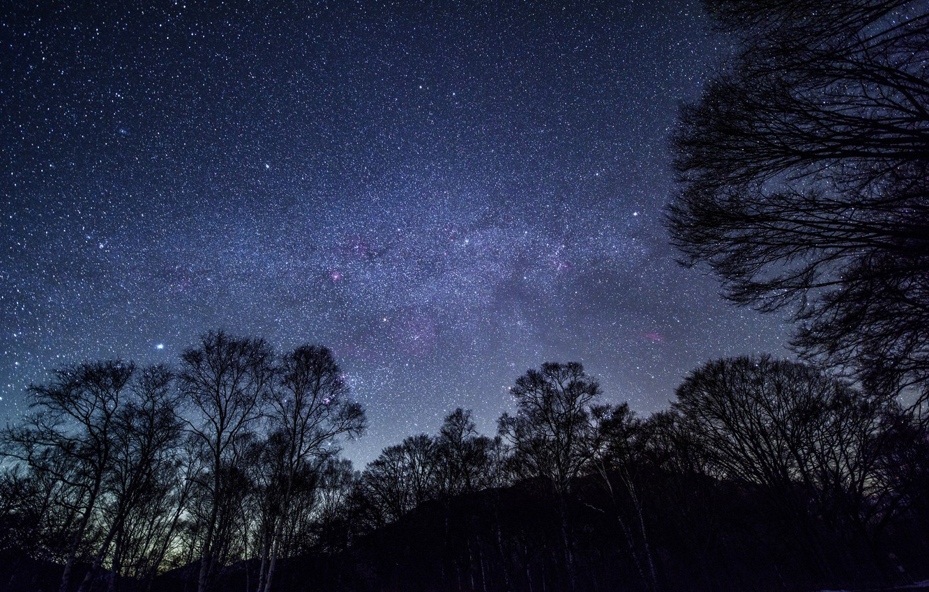 Photo wallpaper the sky, trees, the stars of the night