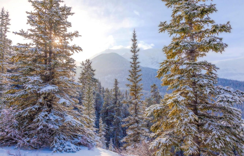 Photo wallpaper winter, the sky, snow, tree