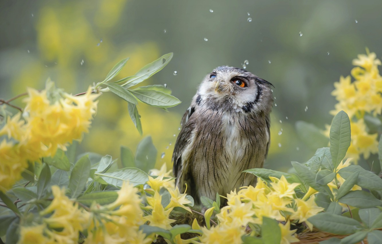 Photo wallpaper leaves, drops, flowers, branches, nature, owl, bird, birds of the world