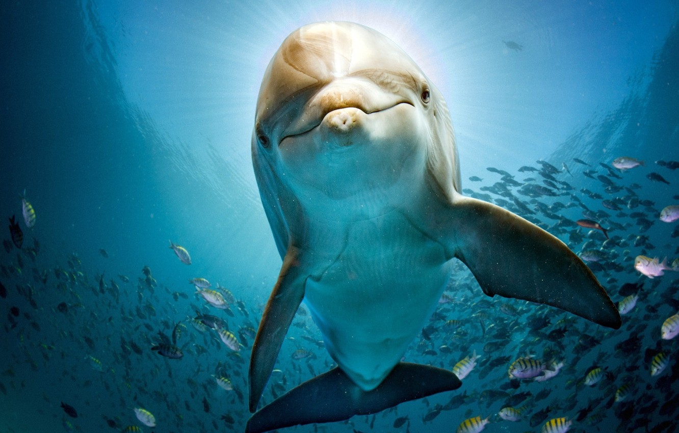 Wallpaper Sea Water Fish Dolphin Blue Under Water Images For Desktop Section Zhivotnye Download