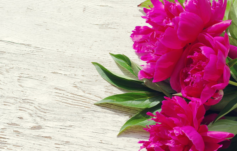 Photo wallpaper pink, wood, pink, flowers, beautiful, peonies, peony
