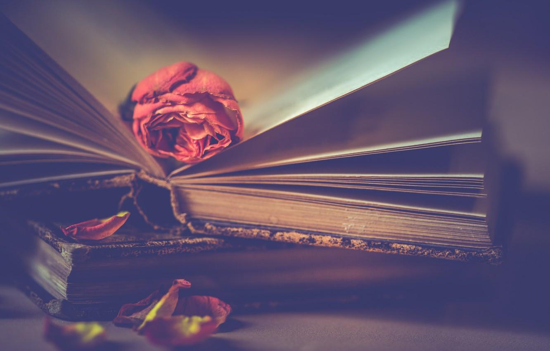 Photo wallpaper flower, style, rose, books, petals