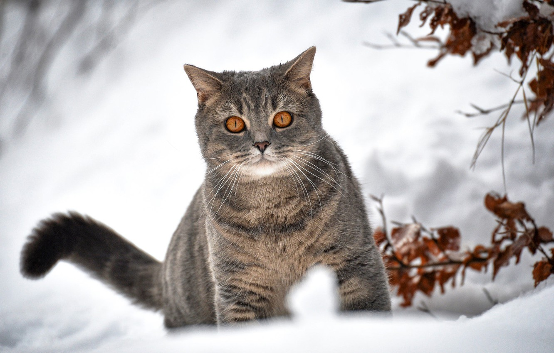 Photo wallpaper winter, cat, snow, branches, bokeh