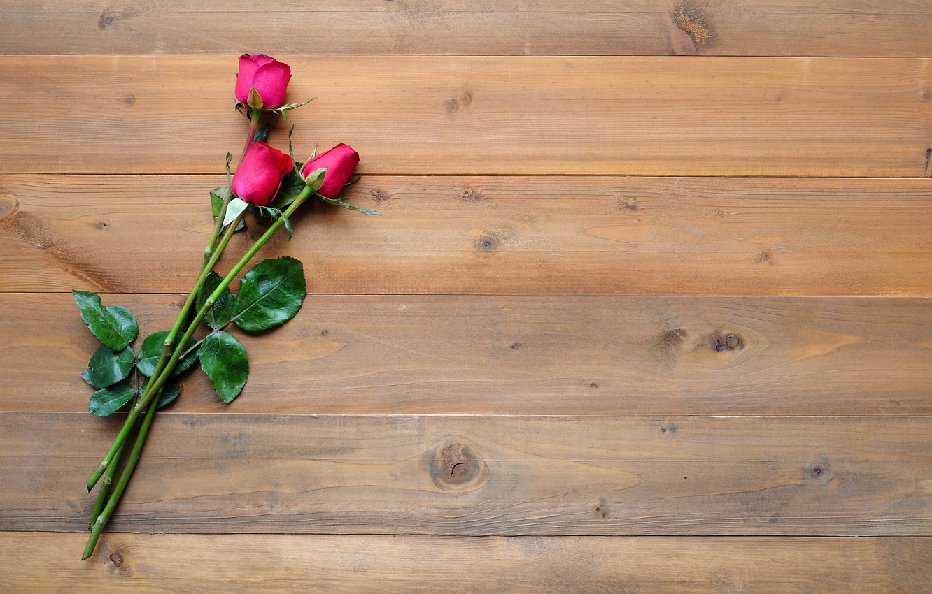 Photo wallpaper flowers, background, roses, buds