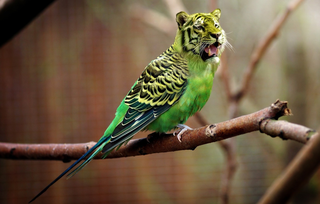 Photo wallpaper nature, tiger, parrot