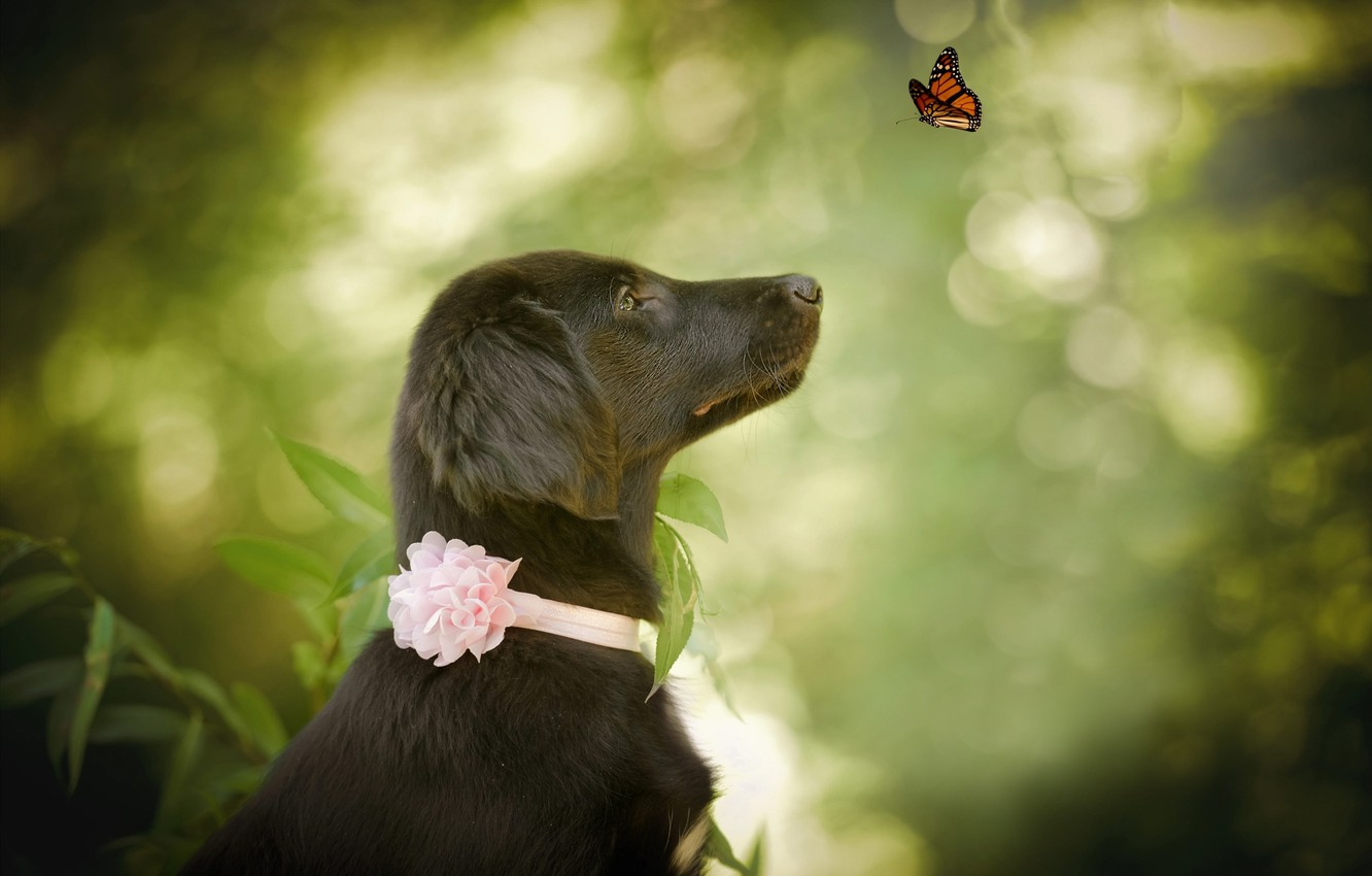 Photo wallpaper nature, animal, butterfly, dog, profile, dog, bokeh