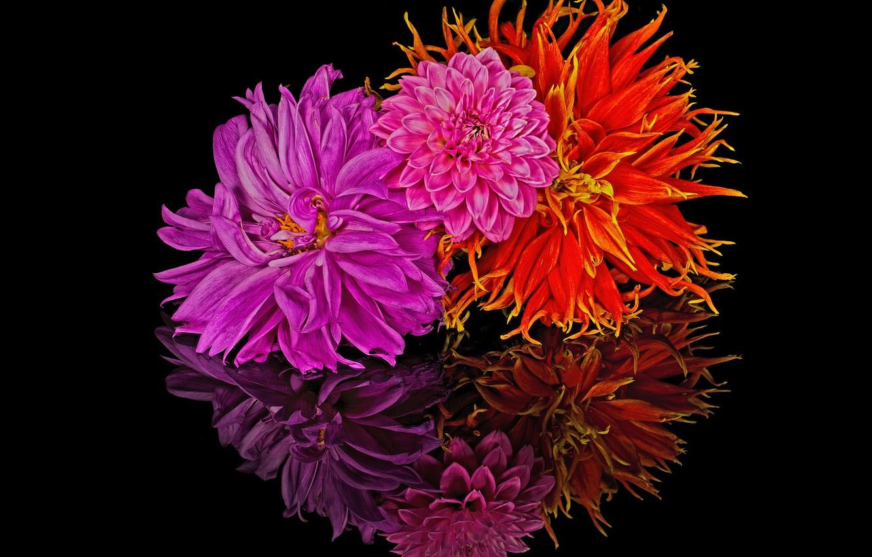 Photo wallpaper reflection, bouquet, petals