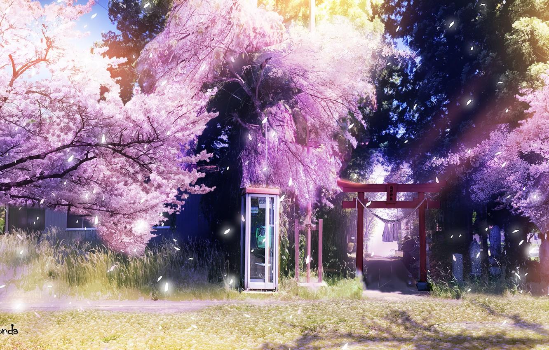 Photo wallpaper spring, Sakura, phone booth, torii