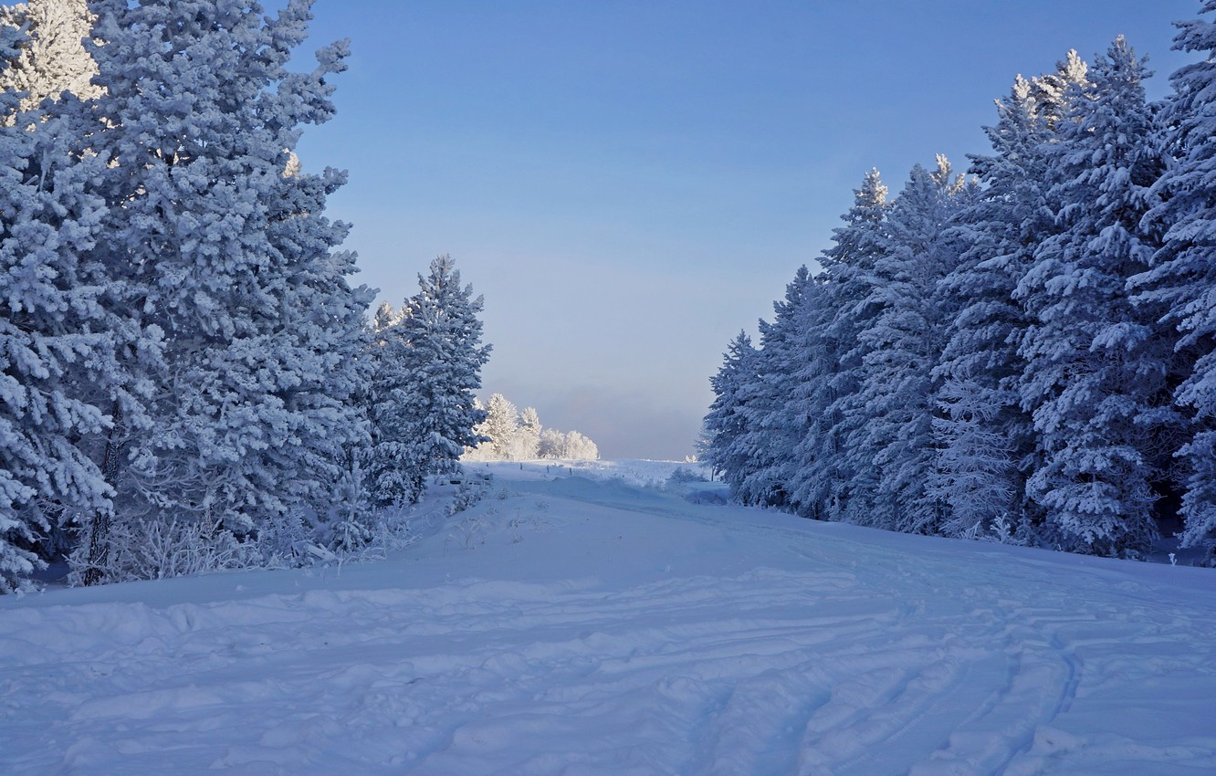 Photo wallpaper winter, frost, forest, snow, trees, nature, tree, frost