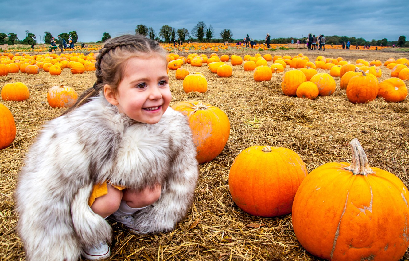 Photo wallpaper field, joy, smile, mood, harvest, girl, pumpkin, chubaka