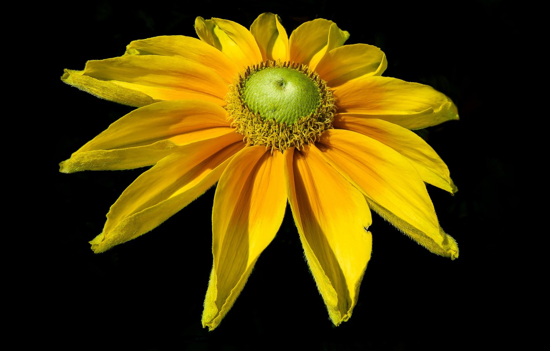 Photo wallpaper flower, background, petals