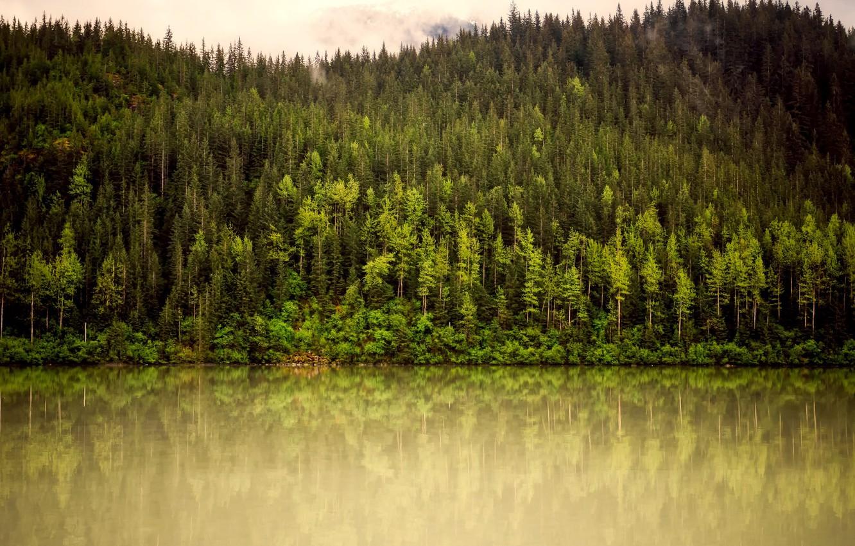 Photo wallpaper greens, forest, trees, mountains, fog, river, Alaska