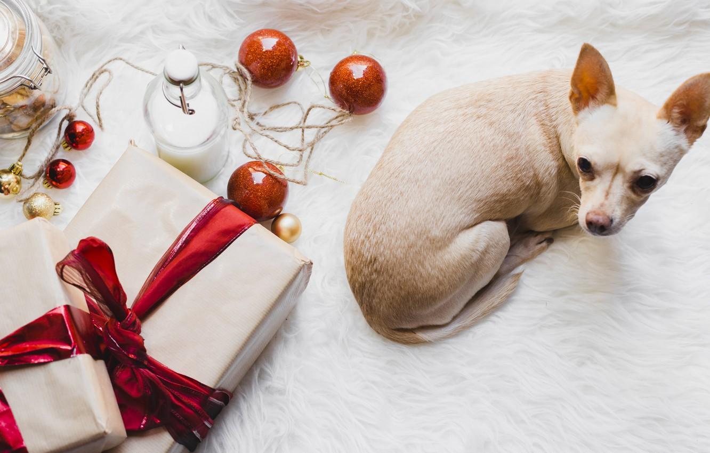 Photo wallpaper balls, toys, new year, puppy, it
