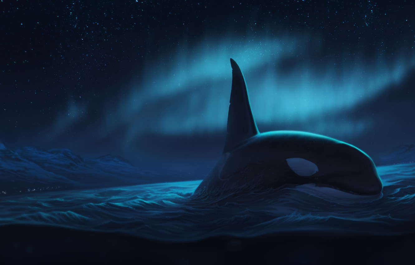 Photo wallpaper night, the ocean, Northern lights, whale, by Ciorano