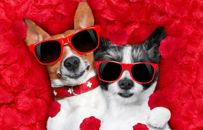 Photo wallpaper dog, petals, love, rose, dog, romantic, hearts, funny, valentine, petals