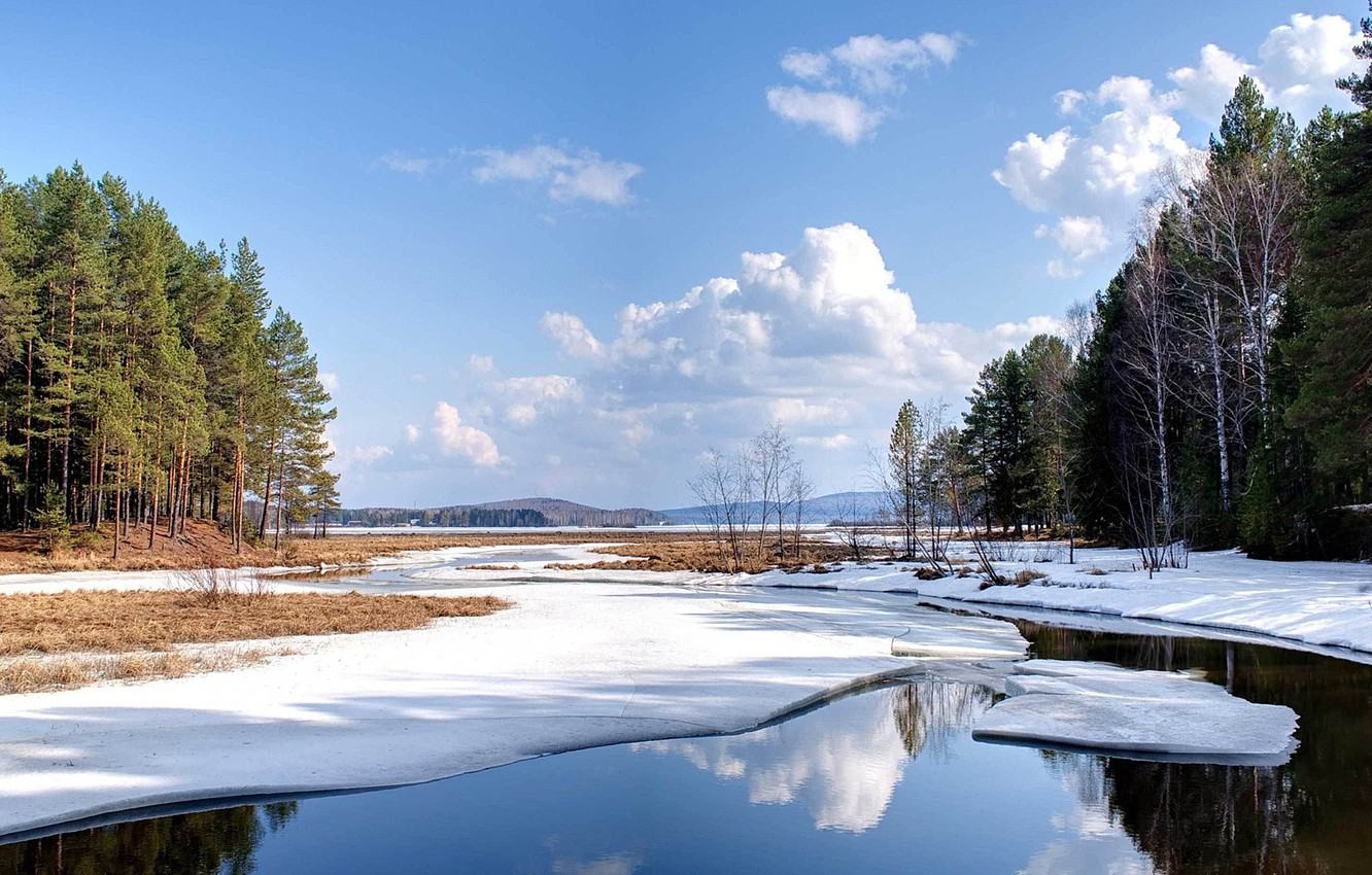 Photo wallpaper ice, forest, snow, nature