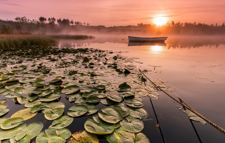 Photo wallpaper fog, lake, boat, morning