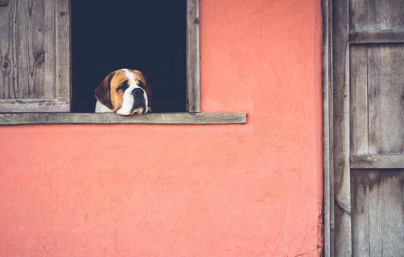 Photo wallpaper sadness, house, dog, window, nostalgia