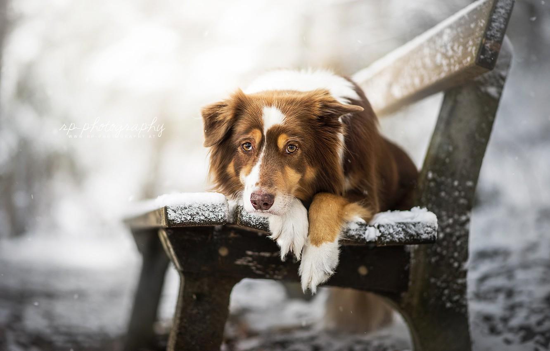 Photo wallpaper look, dog, bench