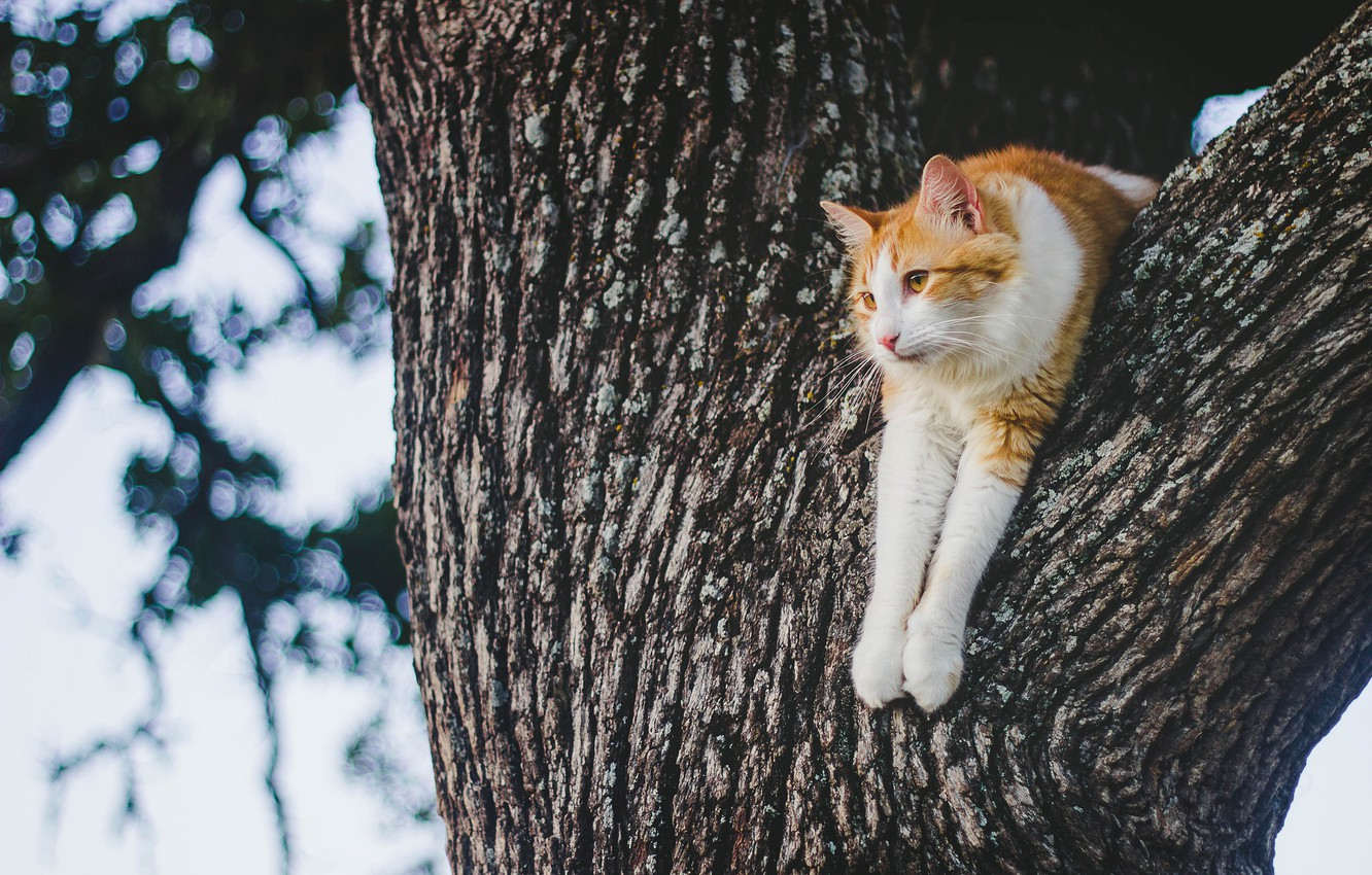 Photo wallpaper cat, stay, on the tree, cat