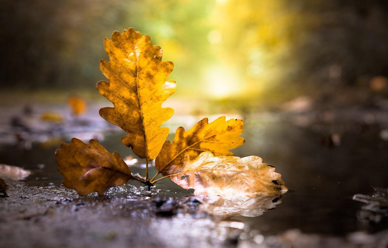 Photo wallpaper autumn, leaves, nature
