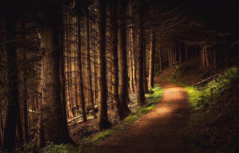Photo wallpaper forest, trail, Scotland, Scotland