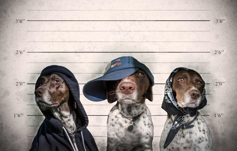 Photo wallpaper cap, trio, shawl, criminals