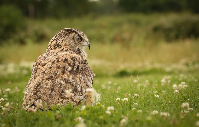 Photo wallpaper nature, owl, bird, weed