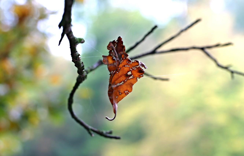 Photo wallpaper autumn, macro, sheet, web, branch, dry