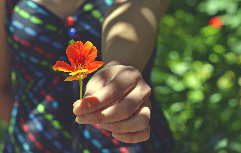 Photo wallpaper flower, girl, hand