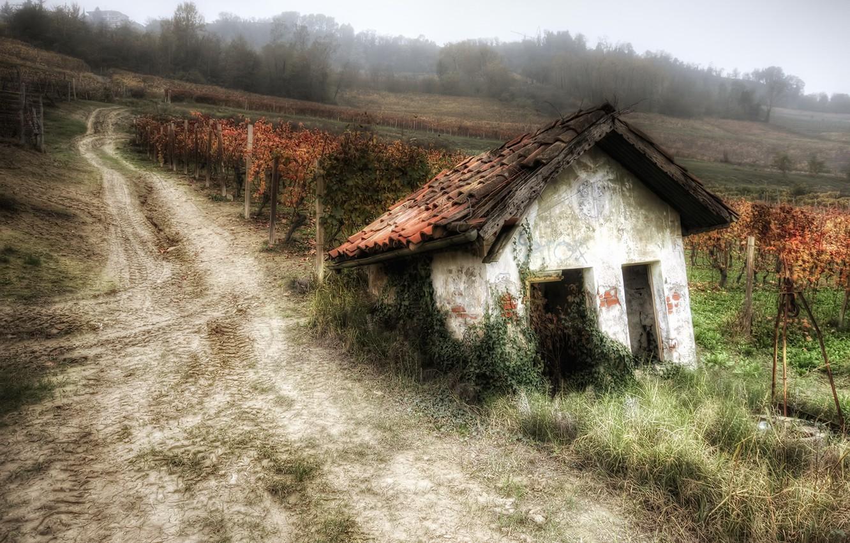 Photo wallpaper road, house, garden, vineyard