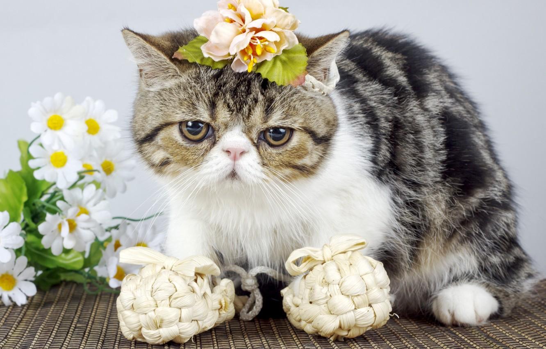 Photo wallpaper cat, cat, look