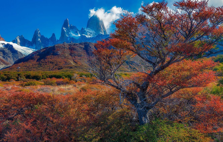 Photo wallpaper autumn, trees, mountains, Argentina, Santa Cruz