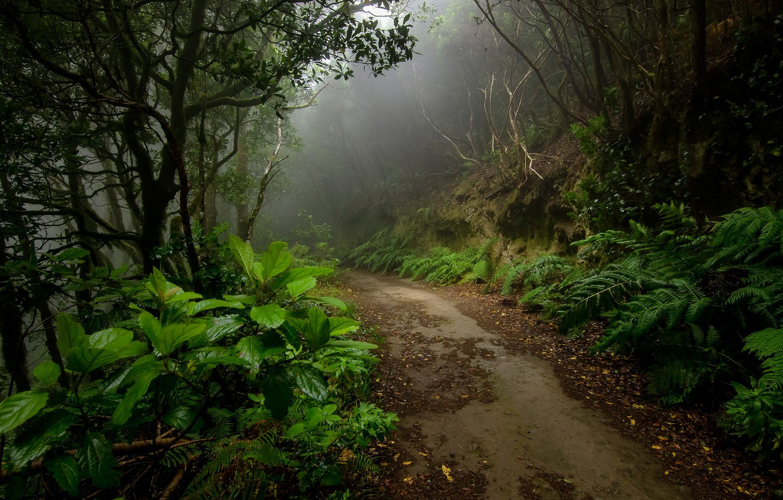 Photo wallpaper road, forest, fog