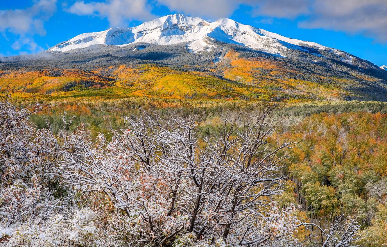 Photo wallpaper autumn, snow, trees, mountains, Colorado, USA, Aspen