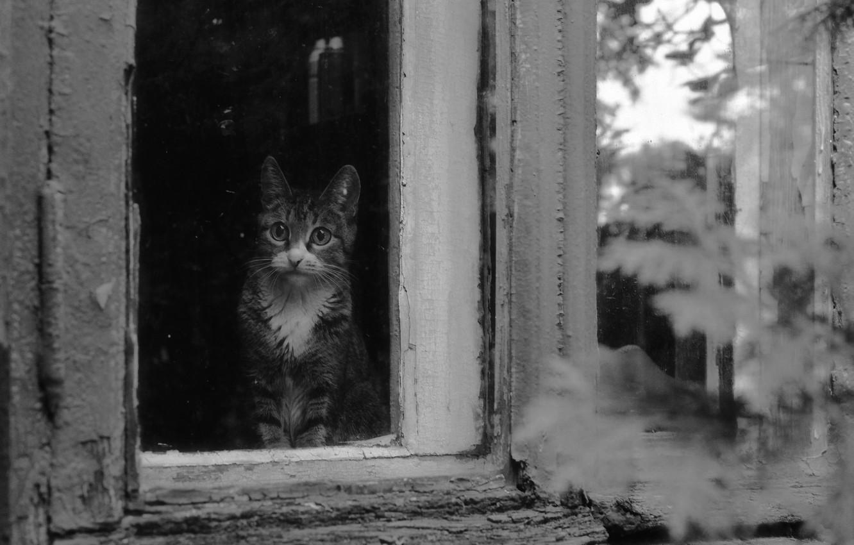 Photo wallpaper cat, house, window