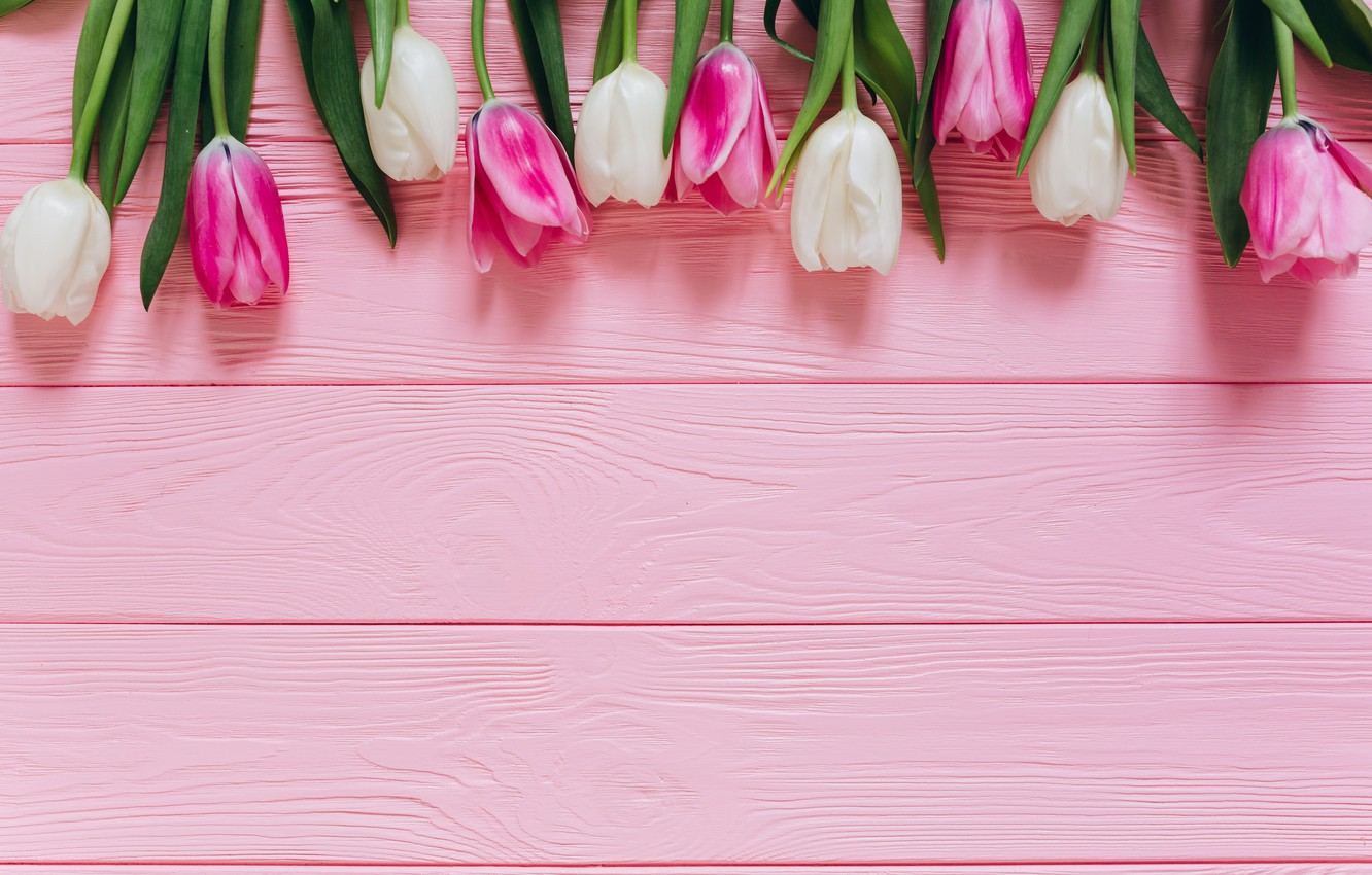 Photo wallpaper Flowers, Tulips, Background, Buds