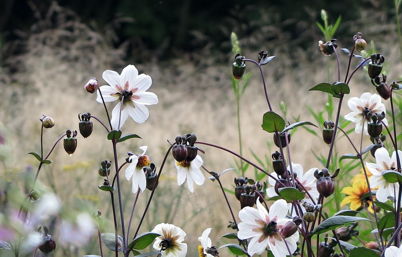 Photo wallpaper field, flowers, Netherlands, Holland
