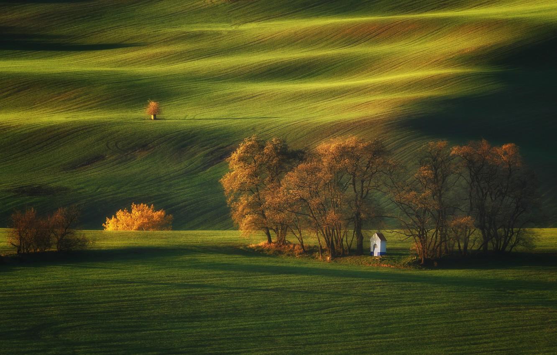 Photo wallpaper light, trees, nature, field