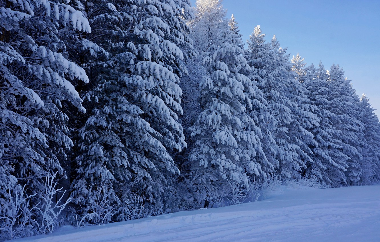 Photo wallpaper winter, forest, snow, trees, nature, tree, frost