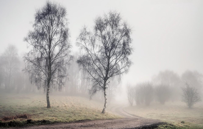 Photo wallpaper road, fog, spring, birch