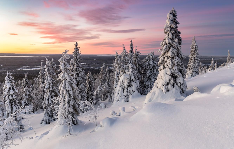 Photo wallpaper winter, trees, sunset, nature